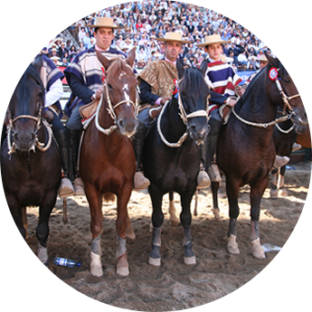 Champion de Chile - Rodeo